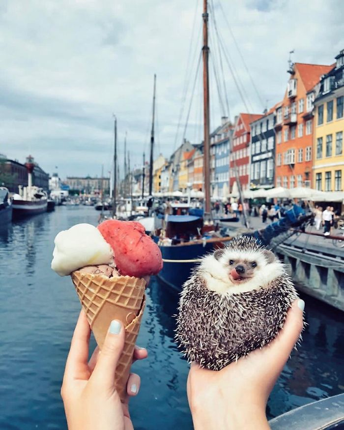 This-lovely-smiling-porcupine-has-15-million-followers-on-your-Instagram-and-we-are-sure-you-will-be
