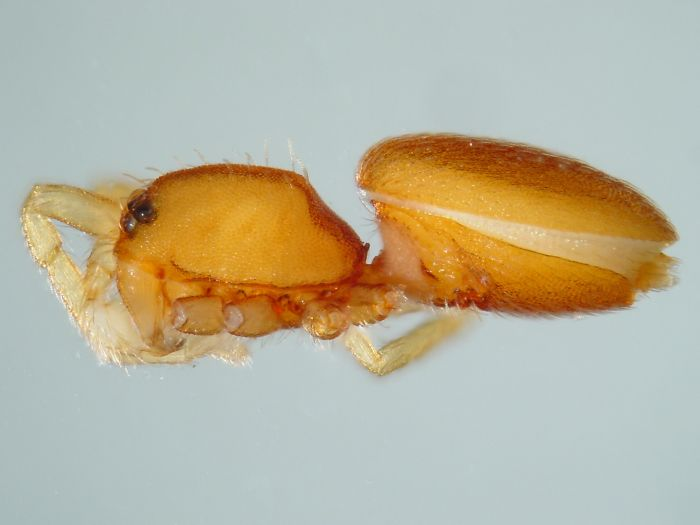 scientists-discovered-71-new-species-california-academy-sciences-2-5def5a98e0a11__700.jpg
